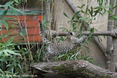 Zoo_Hannover_070912_IMG_3885