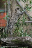 Zoo_Hannover_070912_IMG_3887