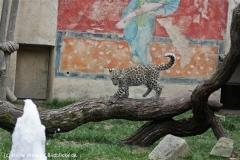 Zoo_Hannover_070912_IMG_3907
