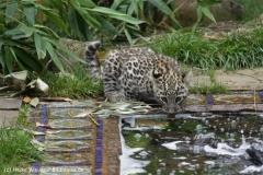 Zoo_Hannover_070912_IMG_3931