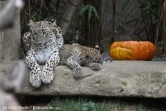 Zoo_Hannover_070912_IMG_3952