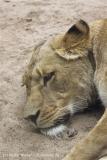 Zoo_Hannover_070912_IMG_3958