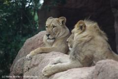 Zoo_Hannover_070912_IMG_3960