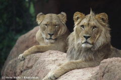 Zoo_Hannover_070912_IMG_3968