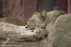 Zoo_Hannover_070912_IMG_3983