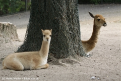 Zoo_Hannover_070912_IMG_2663