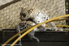 Zoo_Hannover_070912_IMG_2768