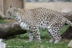 Zoo_Hannover_070912_IMG_2859