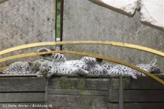 Zoo_Hannover_070912_IMG_2863-2