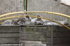 Zoo_Hannover_070912_IMG_2866