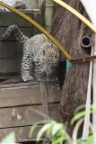 Zoo_Hannover_070912_IMG_2875