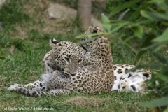 Zoo_Hannover_070912_IMG_2906-2