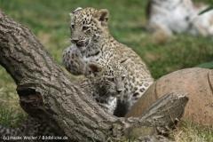 Zoo_Hannover_070912_IMG_2958