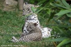 Zoo_Hannover_070912_IMG_2990