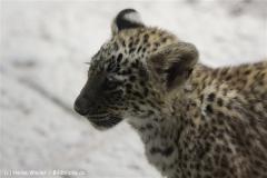 Zoo_Hannover_070912_IMG_2998