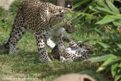 Zoo_Hannover_070912_IMG_3020