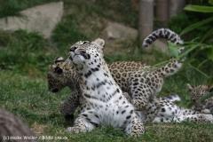 Zoo_Hannover_070912_IMG_3043