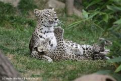 Zoo_Hannover_070912_IMG_3054