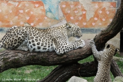 Zoo_Hannover_070912_IMG_3139