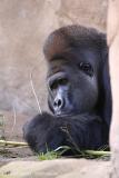 Zoo_Hannover_090916_IMG_7731