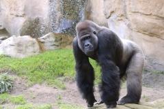 Zoo_Hannover_090916_IMG_7746