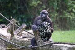 Zoo_Hannover_090916_IMG_7747