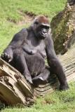 Zoo_Hannover_090916_IMG_7760