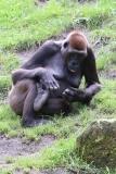 Zoo_Hannover_090916_IMG_7761
