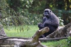 Zoo_Hannover_090916_IMG_7782
