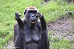 Zoo_Hannover_090916_IMG_7788