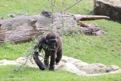 Zoo_Hannover_090916_IMG_7796