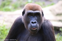 Zoo_Hannover_090916_IMG_7802
