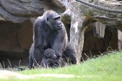 Zoo_Hannover_090916_IMG_7813