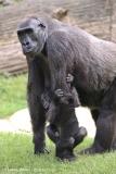 Zoo_Hannover_090916_IMG_7835