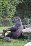 Zoo_Hannover_090916_IMG_7845