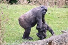 Zoo_Hannover_090916_IMG_7847