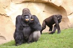 Zoo_Hannover_090916_IMG_7854