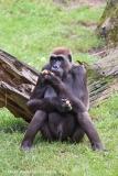 Zoo_Hannover_090916_IMG_7855