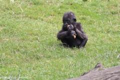 Zoo_Hannover_090916_IMG_7863