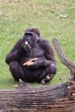 Zoo_Hannover_090916_IMG_7882