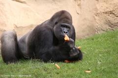Zoo_Hannover_090916_IMG_7892