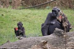 Zoo_Hannover_090916_IMG_7909