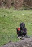 Zoo_Hannover_090916_IMG_7912