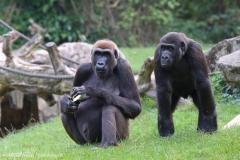 Zoo_Hannover_090916_IMG_7919