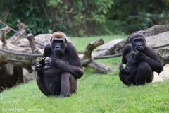 Zoo_Hannover_090916_IMG_7924