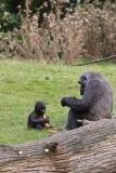 Zoo_Hannover_090916_IMG_7948
