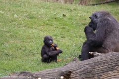 Zoo_Hannover_090916_IMG_7959