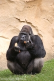 Zoo_Hannover_090916_IMG_7974