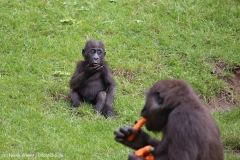 Zoo_Hannover_090916_IMG_7993
