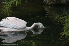Zoo_Hannover_090916_IMG_8891